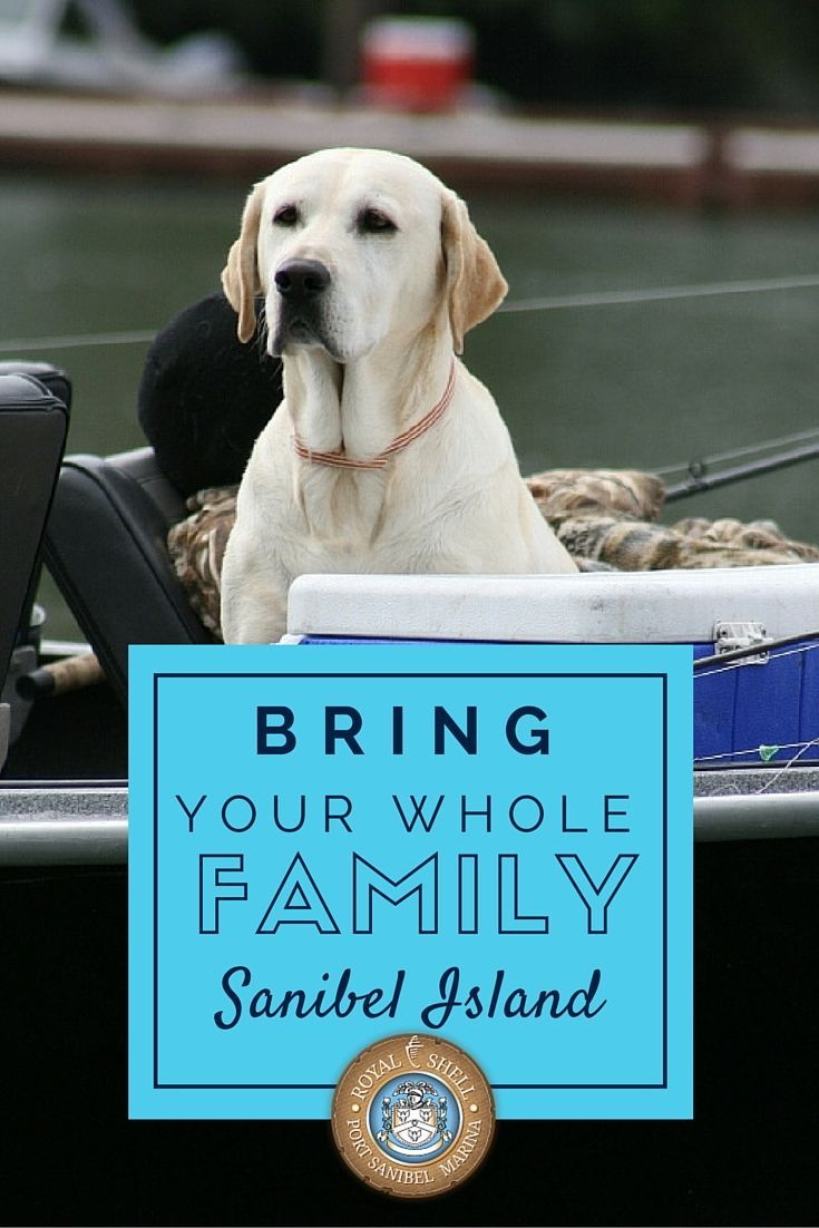 Dog with sign saying Bring Your Whole Family Sanibel Island