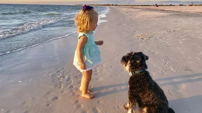 Dog and little girl playing in the sand in Venice Florida
